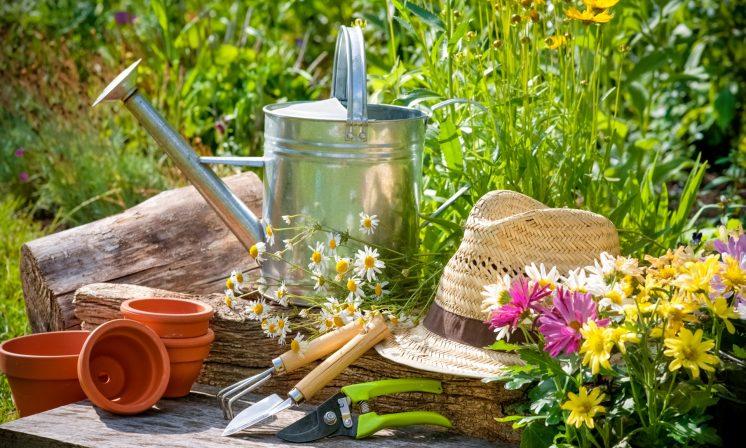 Travaux de jardinage et entretien de potager torigni sur for Tarif tonte pelouse 2016
